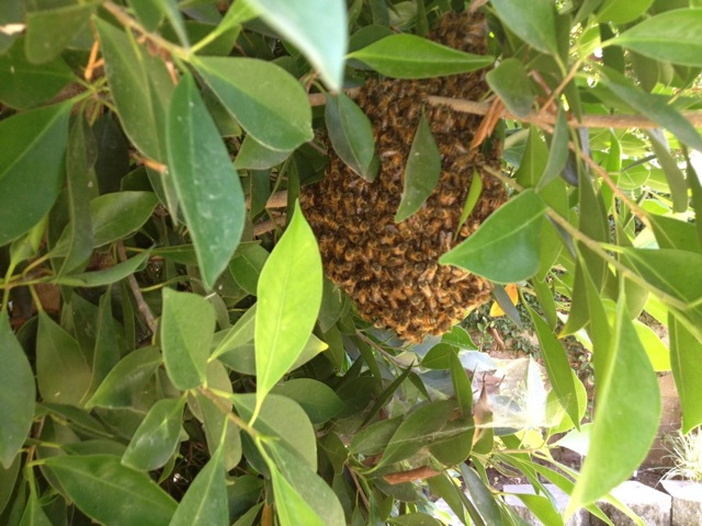 In addition to bee treatment, Roadrunner Exterminating can provide you with hive removal.
